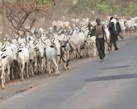 Herdsman arrested for beheading his friend over missing cow in Kebbi