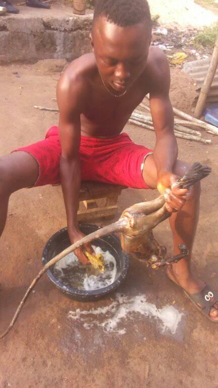 Man kills human-looking monkey in Rivers State (Photos)
