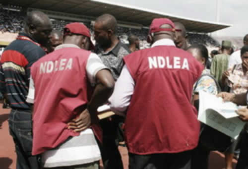 NDLEA in Jigawa state nabs six with 1000kg of drugs
