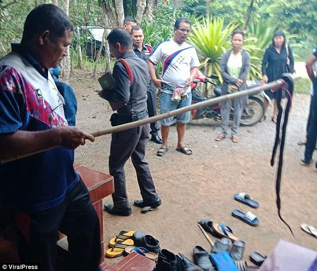 9-year-old girl dies after being bitten in bed by a cobra (Photos/Video)
