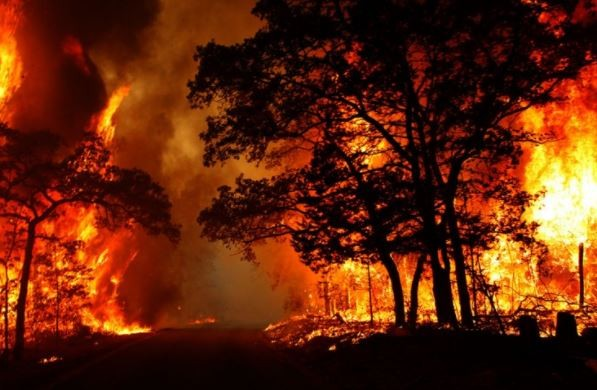 Over 10-Hectares of palm oil farm gutted by wild fire In Plateau State