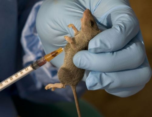 30-year old Medical doctor tests positive to Lassa fever In Kogi State
