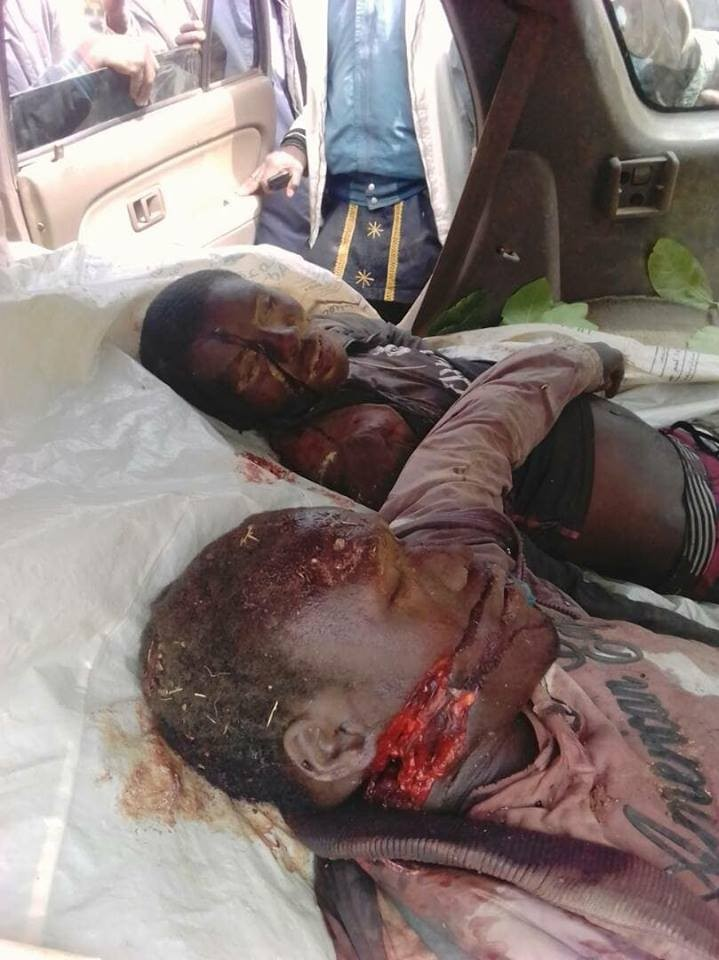 Two herdsmen and their cows allegedly killed irate youths in Plateau state (graphic photos)