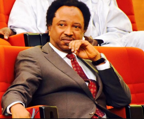 Northern group launches move to recall Senator Shehu Sani from the Senate over his criticism of Buhari and El-Rufai