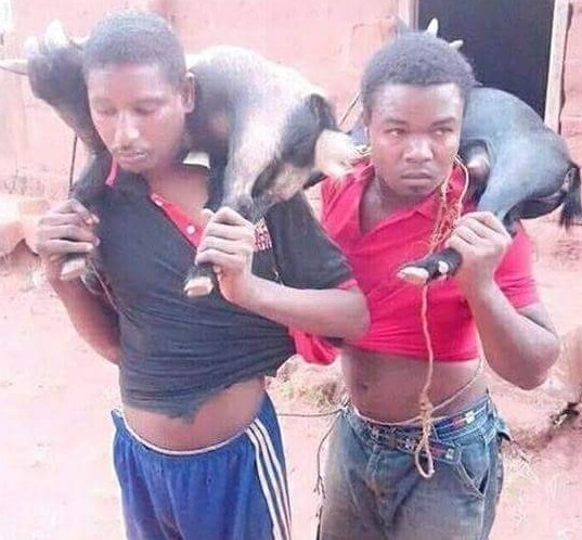 Photo: Two suspected goat thieves caught in Nsukka