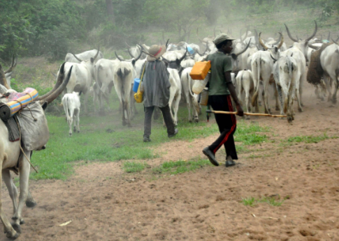 3 Herdsmen?get 1 year jail-term each for open grazing in Benue State