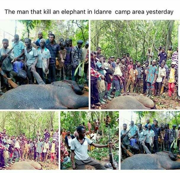 Ali Baba criticises the killing of an elephant in Ogun state, says it would have been more valuable alive