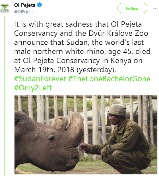 Sudan, the last male northern white rhino, dies in Kenya