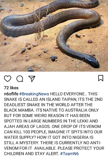 OAP N6 raises alarm over very poisonous snakes that have invaded Lekki and can kill hundreds with just one drop of venom