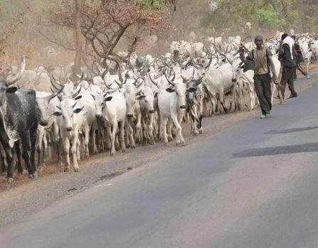 Cattle custlers kill at least 10 people?In fresh attacks in Zamfara State