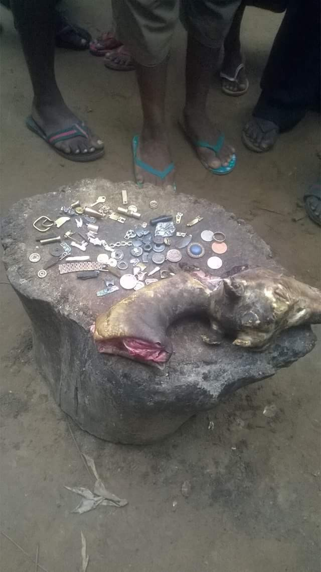 Photos: Woman discovers jewelries, old coins, wedding rings, watches, other items inside goat