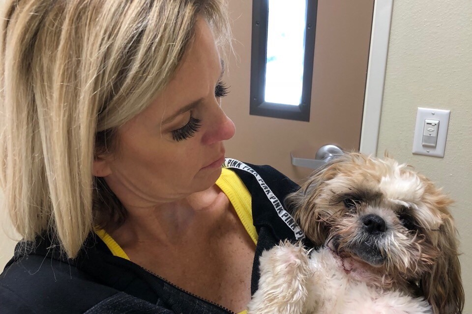 Lady goes on Twitter to ask friends to help raise $3000 for her dog