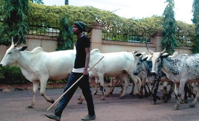 Herdsman stabs police officer to death in Kebbi