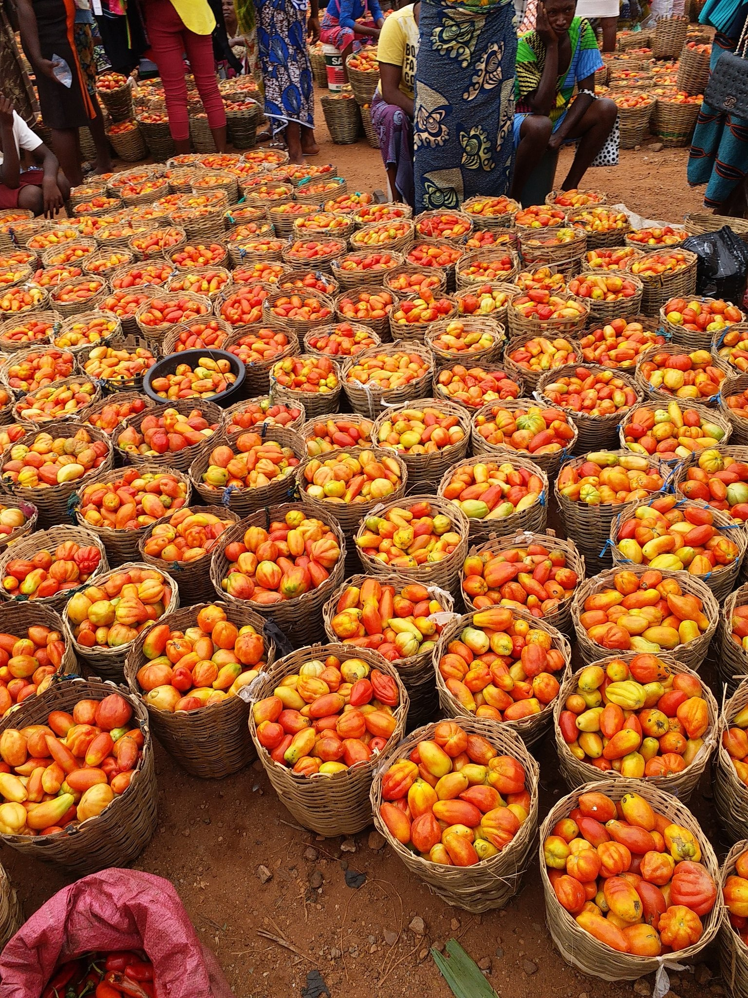 There's A Town In Benue State Where A Whole Basket Of Tomatoes Go For N150