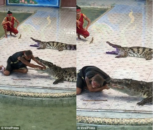 Watch the shocking moment a Reptile handler was attacked by a crocodile after putting his arm inside the beast
