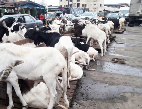 Lagos State government bans the sale of sallah rams on major highways