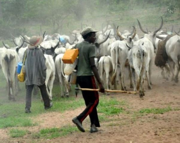 Katsina State police arrest?22-year-old man who stole three cows at gun point