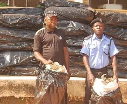 NDLEA arrests two fake policemen with 50 bags of cannabis in Edo State