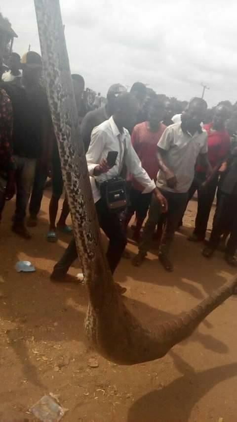Man kills snake that swallowed his dog in Anambra