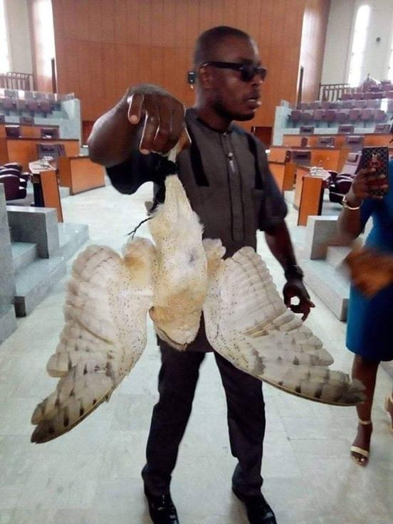 "Photos: ""Strange bird"" allegedly found inside Akwa Ibom State House of Assembly chamber"
