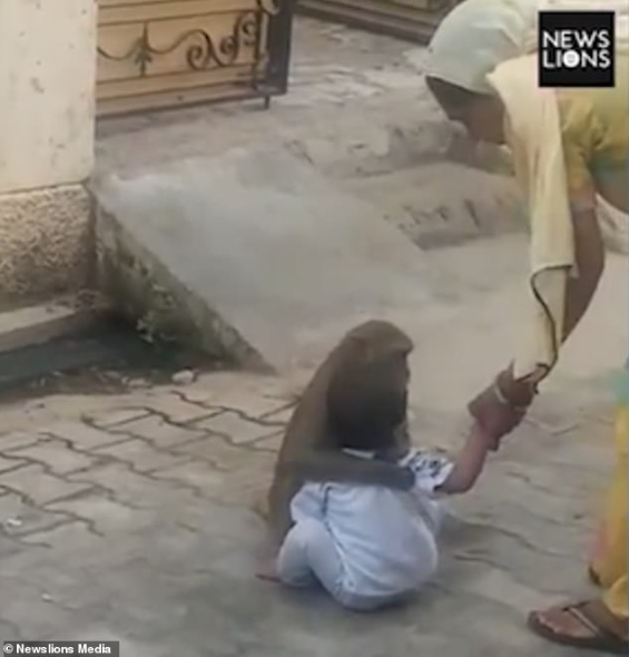 Monkey kidnaps boy, 2, from his home so he could have someone to play with then hugged the boy and refused to give him back (video)