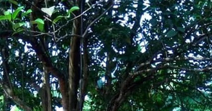 Graphic: Young man commits suicide in Anambra