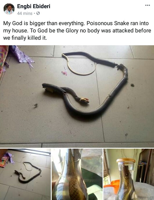 """""""My God is bigger than everything""""- Bayelsa man testifies after he killed a poisonous snake that crawled into his house"""