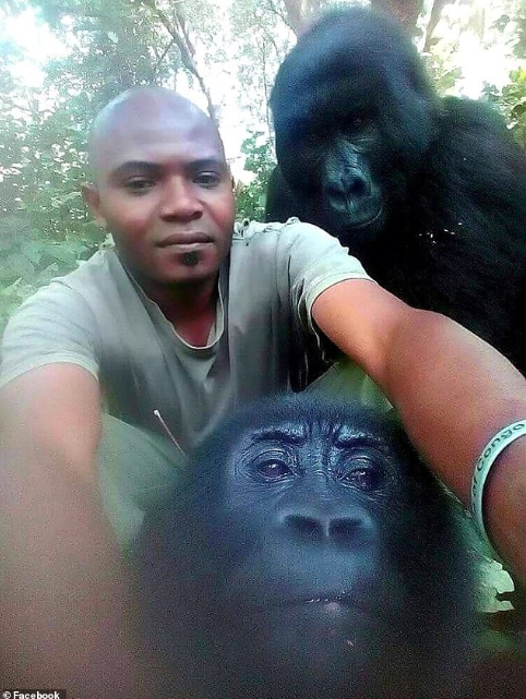 Two gorillas pose for selfies with anti-poaching officers