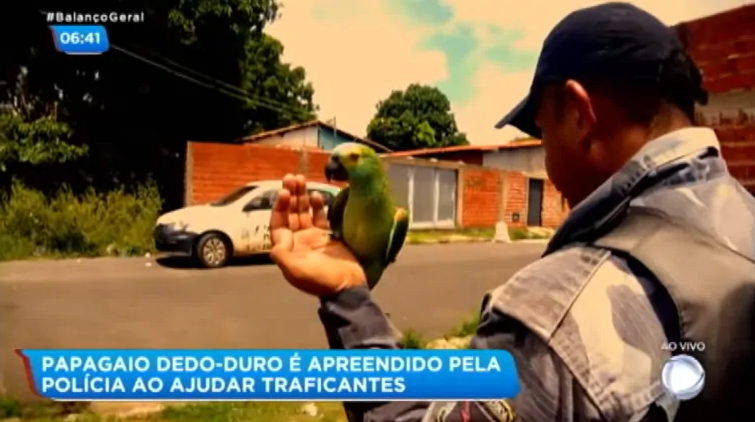 "Parrot is taken into custody for screaming ""Mama, Police!"" to tip off drug dealers to a raid"