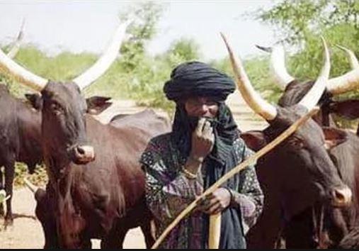 We?ll resist Fulani vigilantes in Igboland - Ohanaeze tells Miyetti Allah