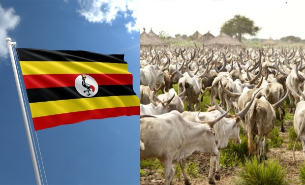 Uganda to issue birth certificates to cows