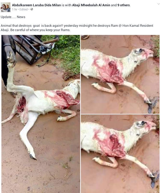 Photos: Mysterious animal reappears in Abaji Abuja, kills a Ram
