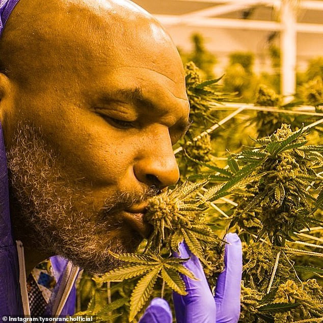 I spend $40,000 on weed every month - Boxing legend, Mike Tyson reveals