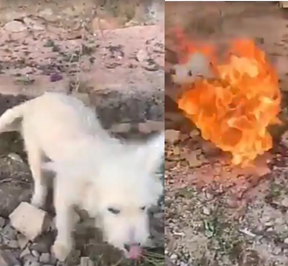 Horrific moment Nigerian boy burnt his pet dog alive for the fun of it and filmed it (graphic photos)