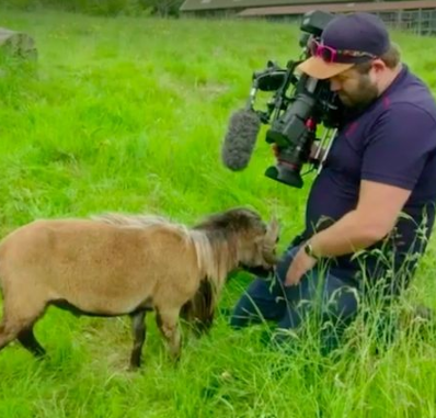 Agonizing moment BBC cameraman had his male member smacked by rare sheep as he filmed the animal