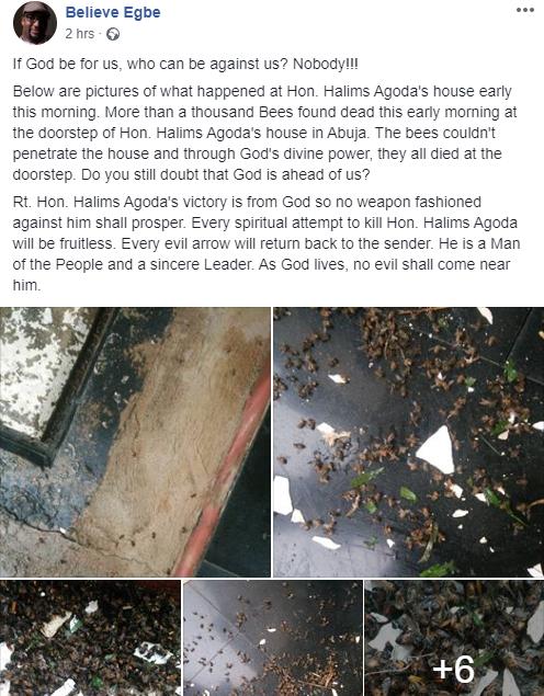 Bees invade Hon. Agoda