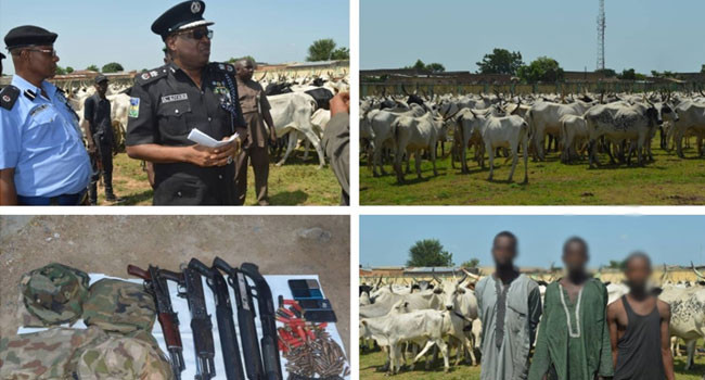Three suspects arrested, 1000 rustled cattle recovered by Police