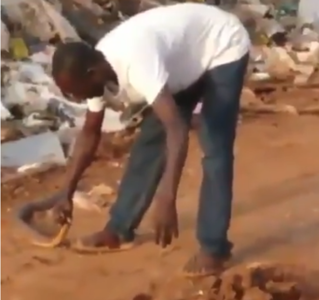 Watch an African snake catcher subdue and catch a cobra with his bare hands