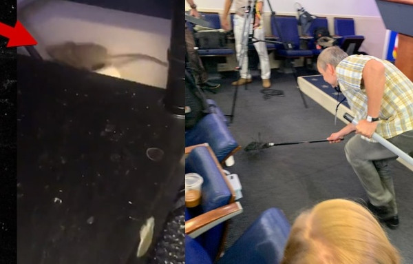 Reporters 'flee' as mouse falls from White House ceiling