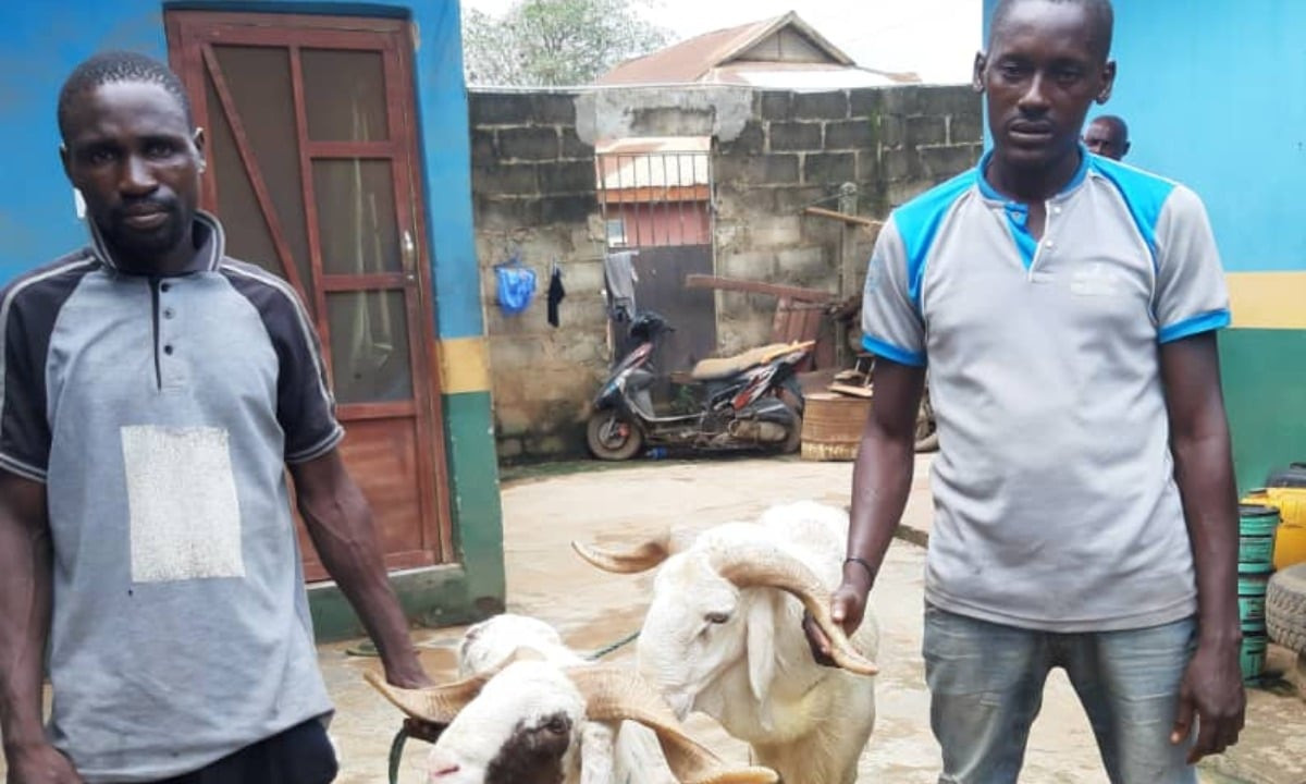Two arrested in Ogun for stealing rams