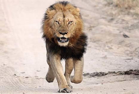 Lion escapes from Kano Zoo