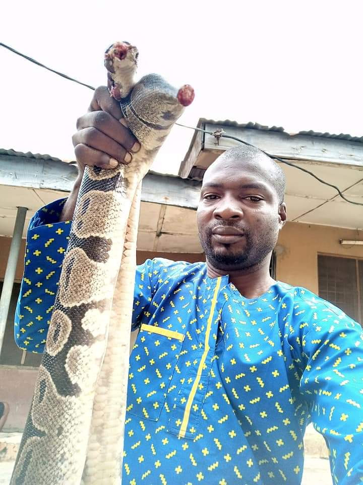 Nigerian man cooks and eats huge snake he killed in his house