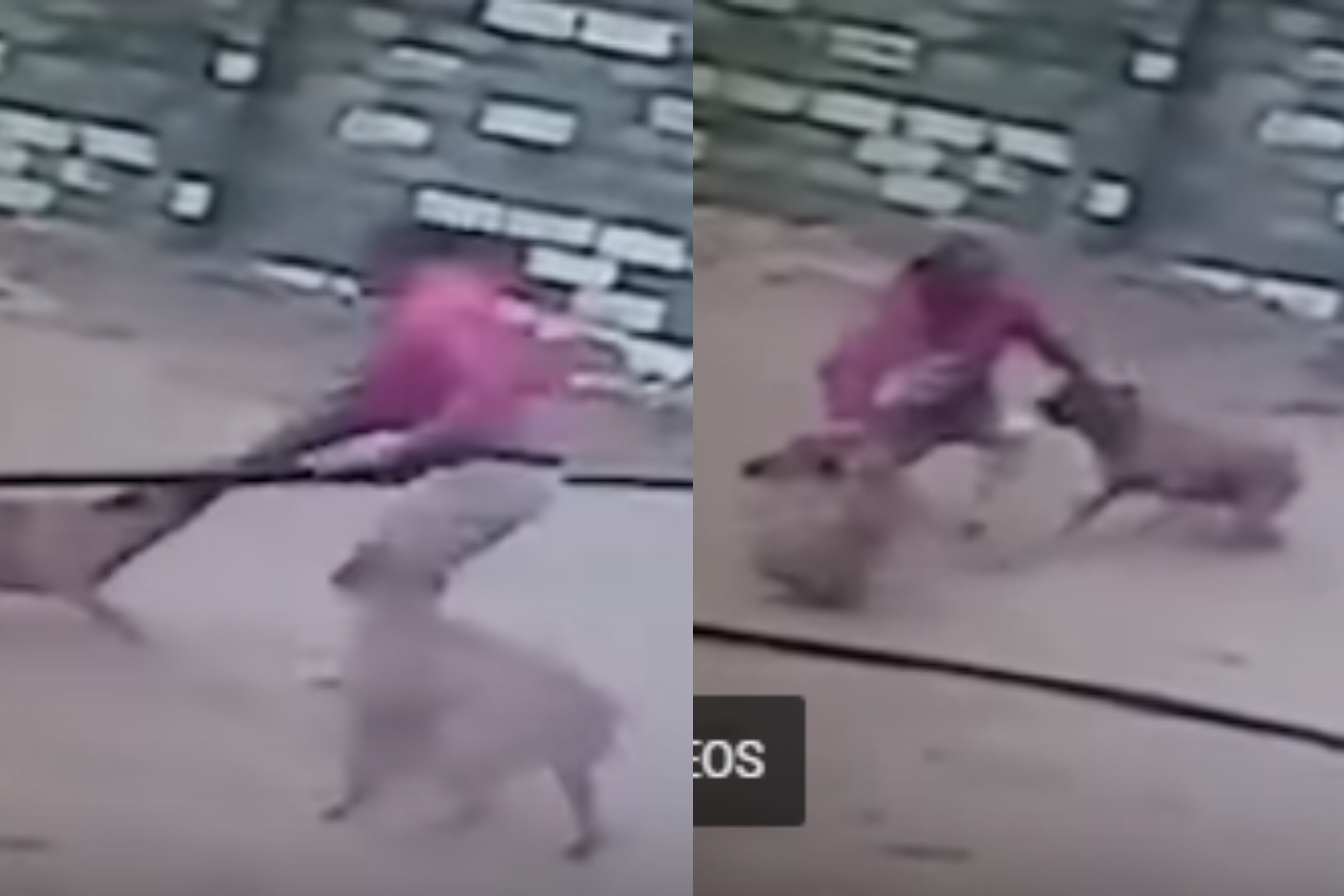 House robber attacked and bitten by 2 vicious dogs after jumping from roof (video)