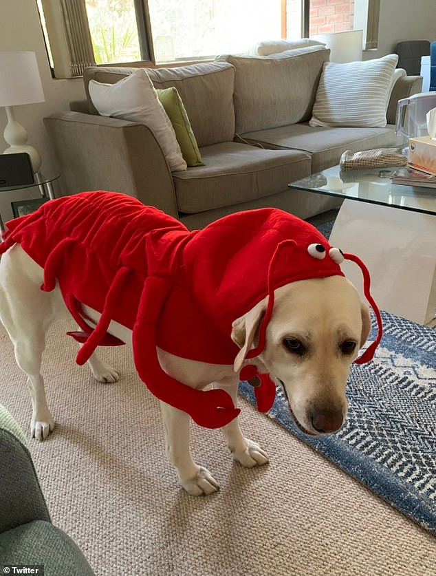 Pets from around the world get in the spirit of the season as they rock Halloween outfits (photos)