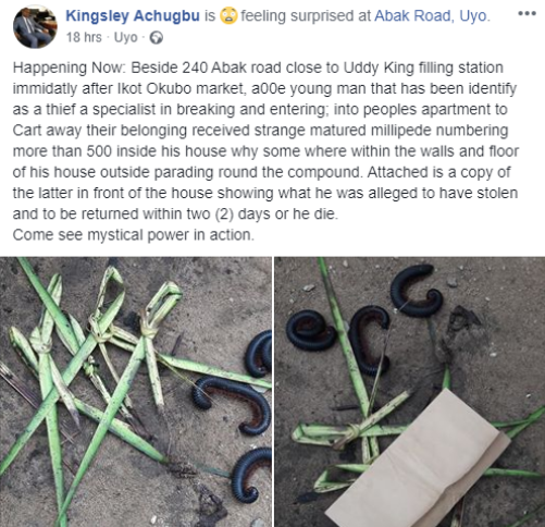 Thief reportedly visited by hundreds of millipedes