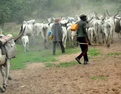 Police arrests 27-year old man who allegedly killed a Fulani herder for destroying his crops