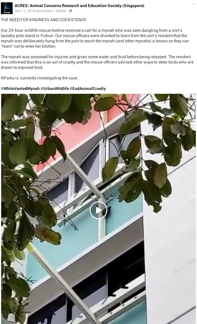 Woman hangs mynah bird to