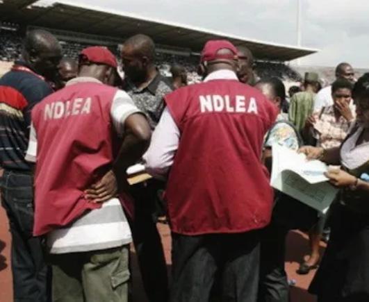 NDLEA arrests four drug merchants in Ondo State