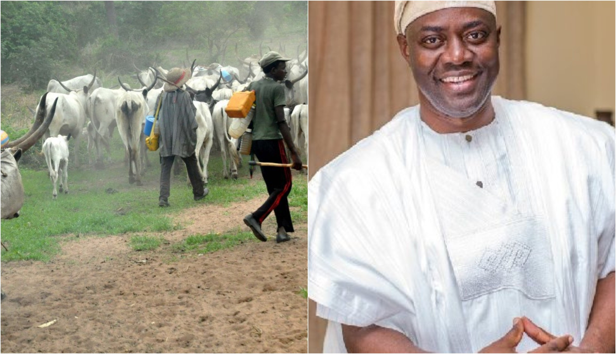 Fulani herdsmen sue Oyo government, Assembly over anti-grazing law