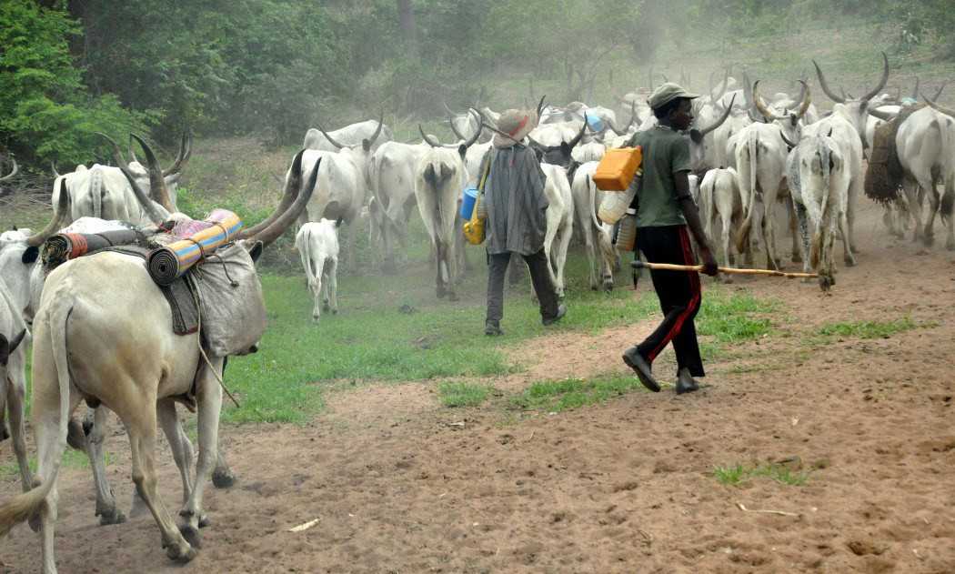 Miyetti Allah bans night grazing nationwide
